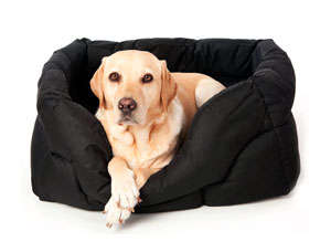 camas-baratas-para-perros