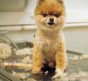 corte de pelo perro