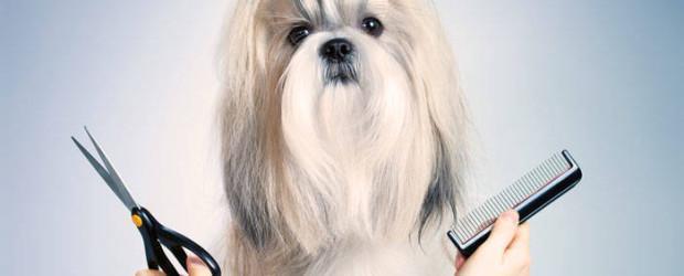 cursos peluquería canina