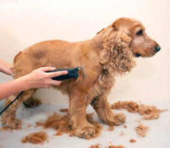 formacion peluqueria canina