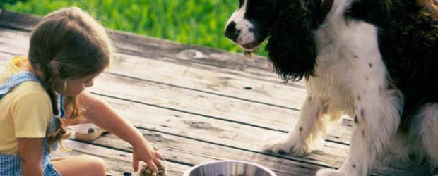 piensos hipoalergenicos para perros