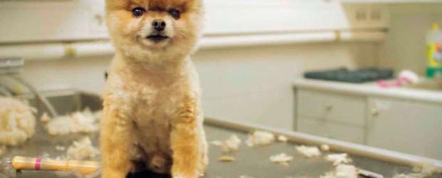 precios peluqueria canina