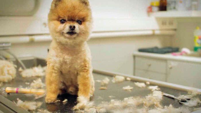 Lista de precios de la peluquería canina 4b8253538e10